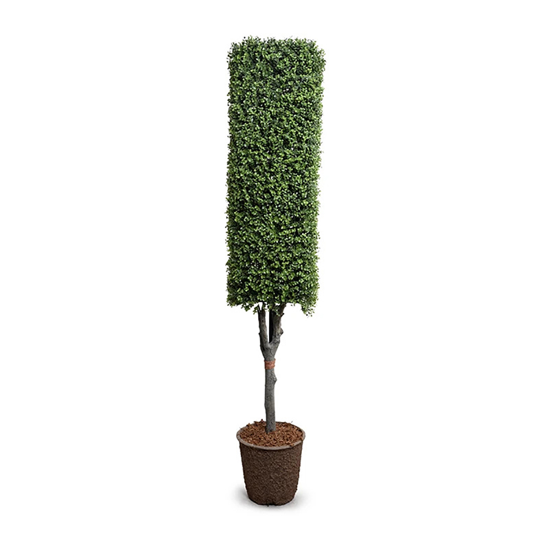 >Enduraleaf 76 in Faux Boxwood Square Topiary
