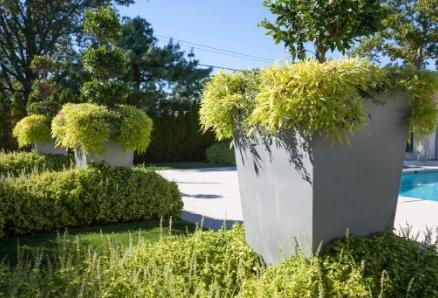 Capital Garden Box Planters